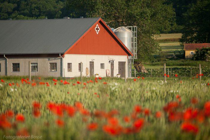 Alvastra Kungsgård 3